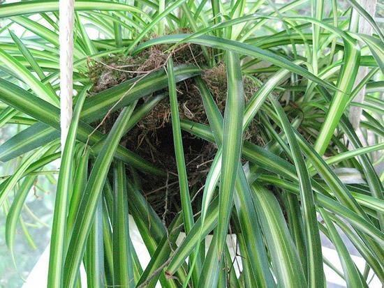As 22 melhores plantas para ter em casa a nossa vida for Plantas decorativas de exterior