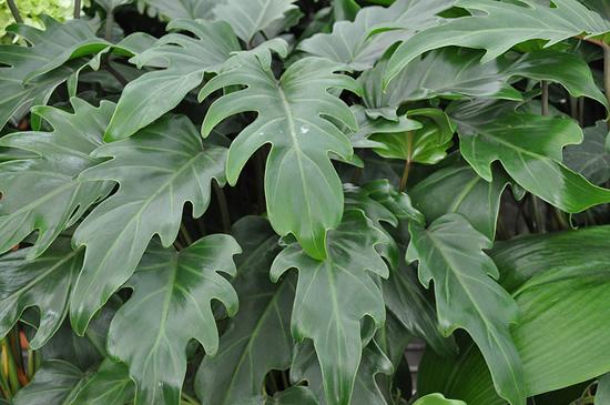 plantas de jardim que gostam de umidade : plantas de jardim que gostam de umidade:Jardim da Terra: FICA A DICA: 22 plantas para cultivar dentro de casa
