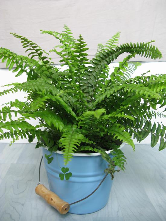 As 22 melhores plantas para ter em casa  A Nossa Vida