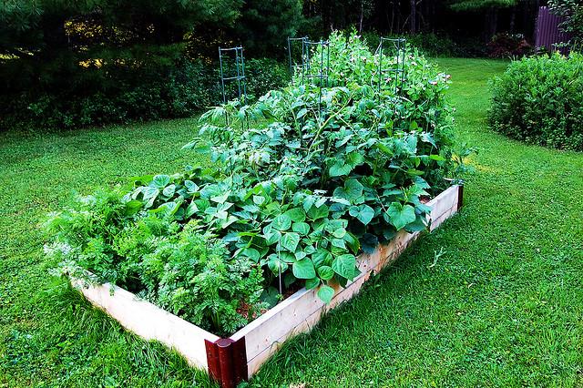 as melhores plantas para plantar juntas a nossa vida