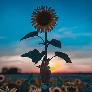 Retrato de Flowers_