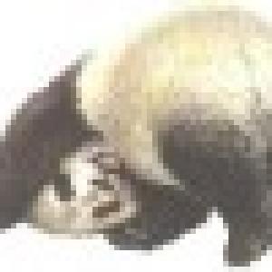 Retrato de panda alegre