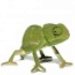 Retrato de camaleaosorridente