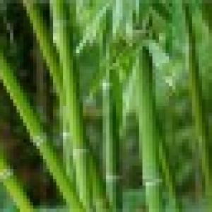 Retrato de Bamboo SpaZen