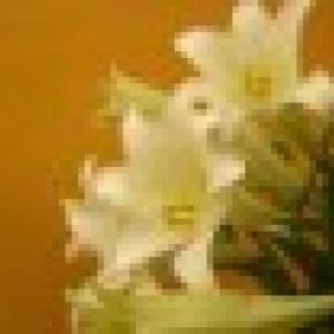 Retrato de laralopes