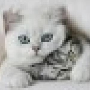Retrato de Miau90