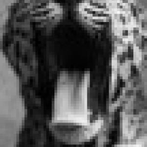 Retrato de Leoparda