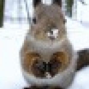 Retrato de Squirrel