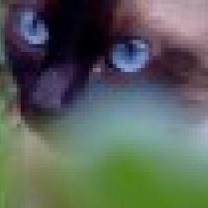 Retrato de mimi1981
