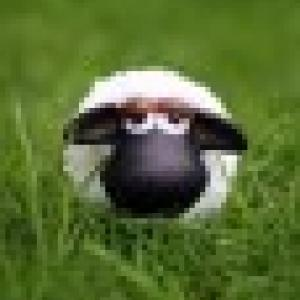 Retrato de fili_sheep