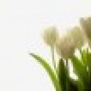 Retrato de tulipa09